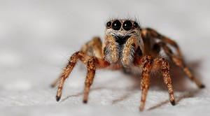 spider-564685_1920