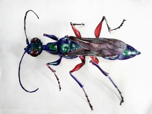emerald-cockroach-wasp-3688733_1920 (1)