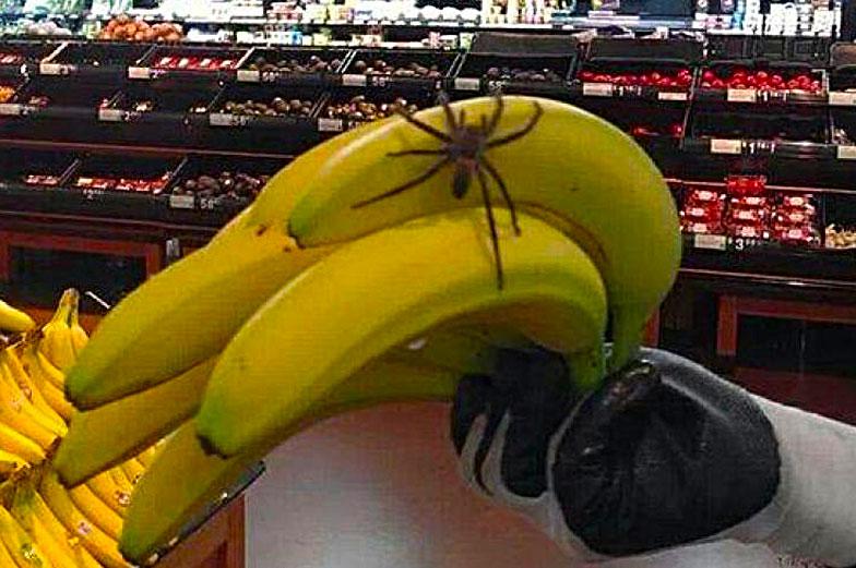 Araignée Banane